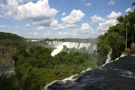 Argentina Jungle