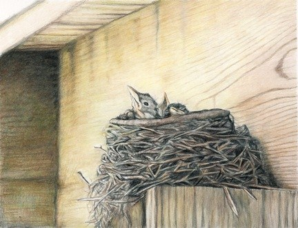 """Robin Nest"" original fine art by Charlotte Yealey"