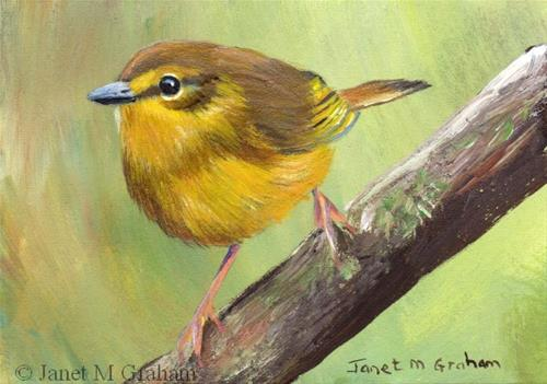 """Flavescent Warbler ACEO"" original fine art by Janet Graham"