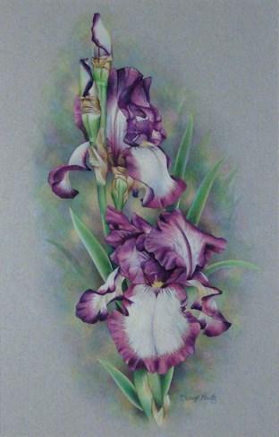 """Iris"" original fine art by Cheryl Plautz"