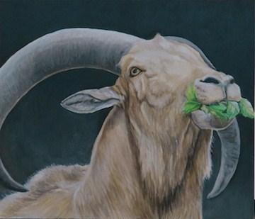"""Auodad Sheep"" original fine art by Charlotte Yealey"