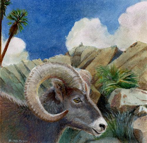 """Watercolor: Big Horn Sheep Looks East (& Winner of the Art Supplies!)"" original fine art by Belinda Del Pesco"