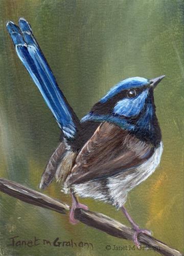 """Superb Fairy Wren ACEO"" original fine art by Janet Graham"