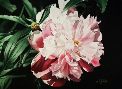 """Pink Peony"" original fine art by Jacqueline Gnott, TWSA, WHS"