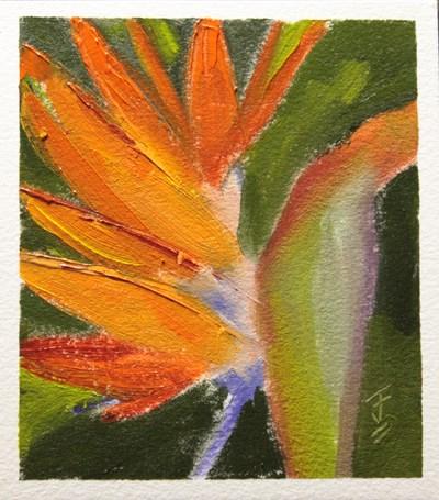 """Bird of Paradise"" original fine art by Jane Frederick"