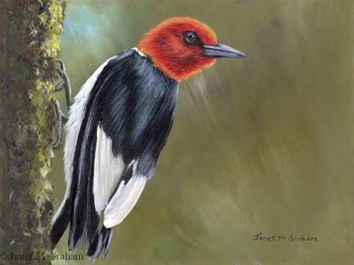 """Red Headed Woodpecker"" original fine art by Janet Graham"