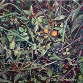 """""""Oil painting: Hawkweed"""" original fine art by Deb Anderson"""