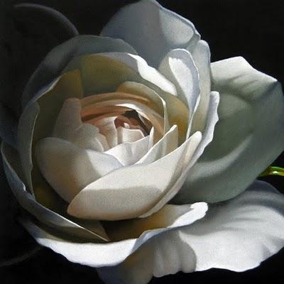 """Rose In Shadow 6x 6"" original fine art by M Collier"