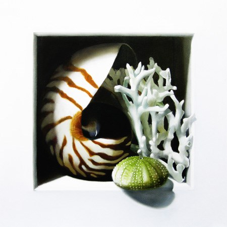"""""""Nautilus, Coral and Urchin 8x8"""" original fine art by M Collier"""