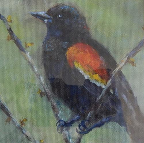 """""""Redwing Blackbird"""" original fine art by Lina Ferrara"""