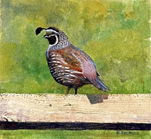 """Watercolor Birds: California Quail (the Pasadena Artwalk & Printmaker LinkLove)"" original fine art by Belinda Del Pesco"