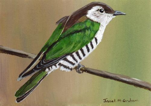 """Shining Bronze Cuckoo ACEO"" original fine art by Janet Graham"
