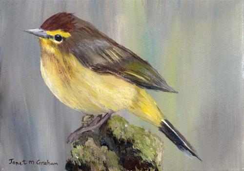 """Palm Warbler ACEO"" original fine art by Janet Graham"