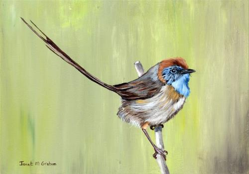 """Mallee Emu Wren"" original fine art by Janet Graham"