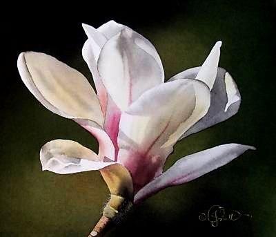 """Sunset Magnolia"" original fine art by Jacqueline Gnott, TWSA, WHS"