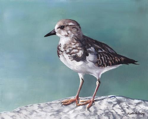 """Plover"" original fine art by Charlotte Yealey"