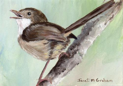"""""""Red Backed Fairy Wren (female) ACEO"""" original fine art by Janet Graham"""