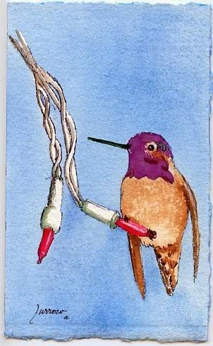 """Hummingbird"" original fine art by Sue Furrow"