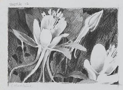 """""""Columbine__colorado, flower, sketch"""" original fine art by V.... Vaughan"""