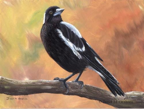 """Australian Magpie No 6"" original fine art by Janet Graham"