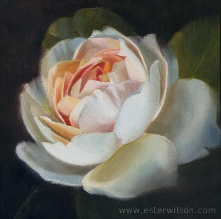 """Peony Rose"" original fine art by Ester  Iva Wilson"