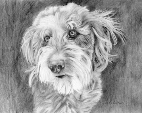 """Labradoodle"" original fine art by Janet Graham"