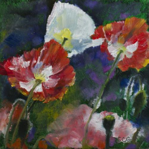 """Backlit Poppies"" original fine art by Sue Churchgrant"