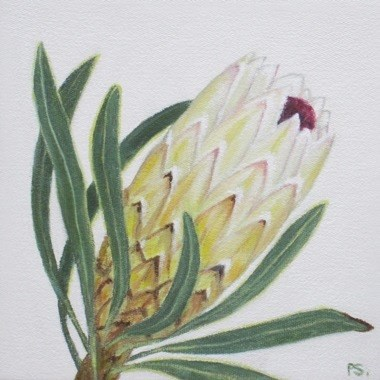 """Protea I"" original fine art by Pera Schillings"