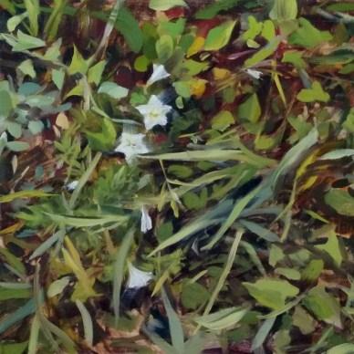 """""""Oil Painting of Bindweed"""" original fine art by Deb Anderson"""
