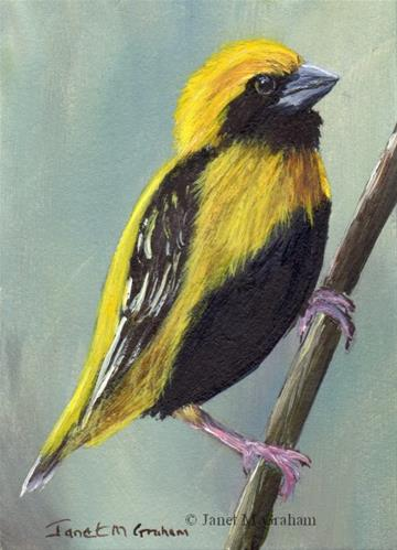 """Yellow Crowned Bishop ACEO"" original fine art by Janet Graham"
