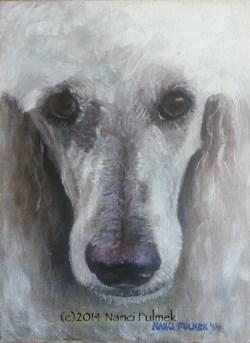 """""""Scarlett – Poodle Portrait"""" original fine art by Nanci Fulmek"""