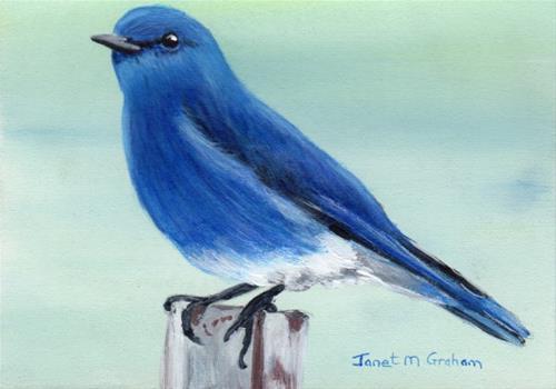 """""""Mountain Bluebird ACEO"""" original fine art by Janet Graham"""
