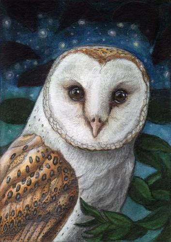 """Barn Owl at Night"" original fine art by Lisa Ferguson"