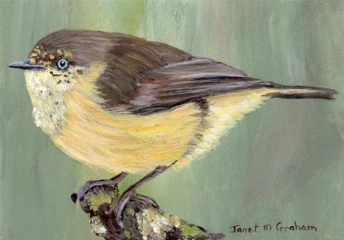 """Buff Rumped Thornbill ACEO"" original fine art by Janet Graham"