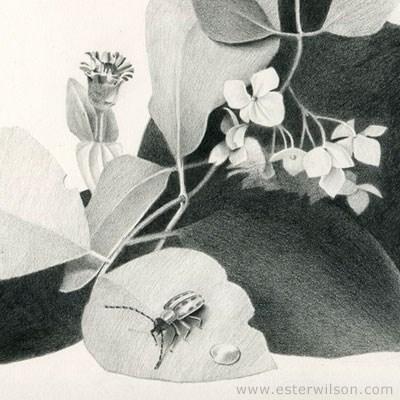 """""""Hydrangea Flower Beatle"""" original fine art by Ester Wilson"""