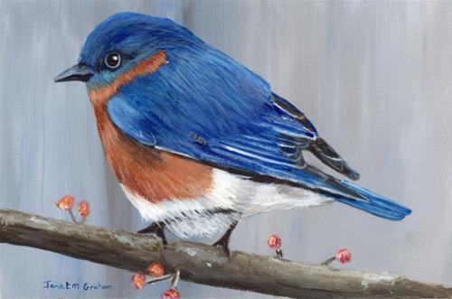"""""""Eastern Bluebird"""" original fine art by Janet Graham"""