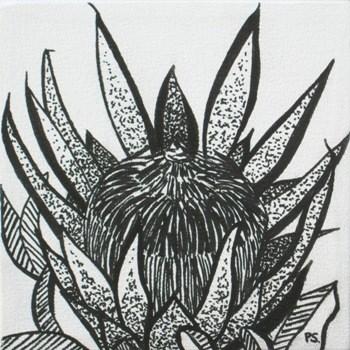 """""""Protea Madiba b/w"""" original fine art by Pera Schillings"""