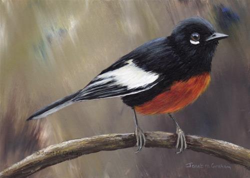 """Painted Redstart No 3"" original fine art by Janet Graham"