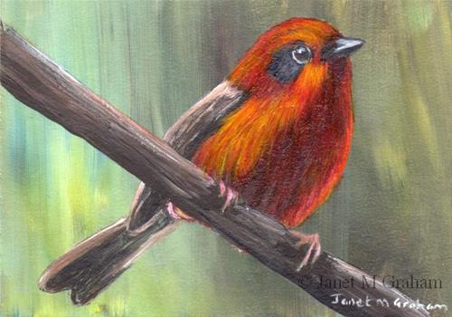 """Red Warbler ACEO"" original fine art by Janet Graham"