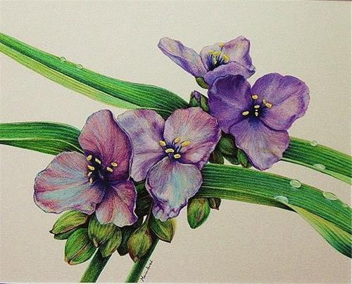 """""""Spiderwort"""" original fine art by Maria Levandowski"""