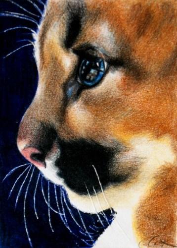"""Wild Kitten"" original fine art by Crystal Cook"