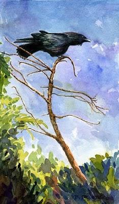 """Watercolor: American Crow"" original fine art by Belinda Del Pesco"