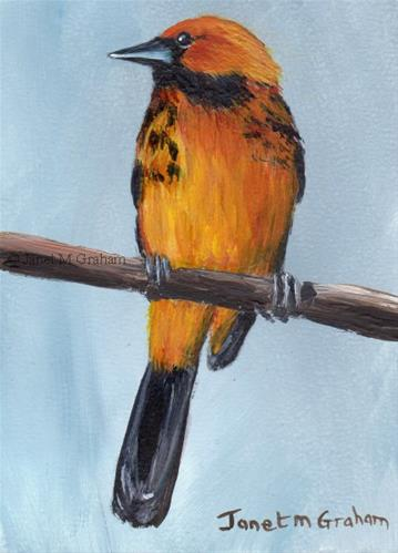 """Spot Breasted Oriole ACEO"" original fine art by Janet Graham"