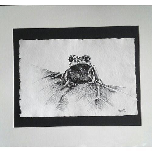 """Pen Drawing of Frog"" original fine art by Camille Morgan"