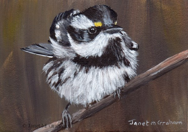 """""""Black Throated Gray Warbler ACEO"""" original fine art by Janet Graham"""