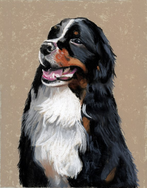 """Bernese Mountain dog portrait"" original fine art by Ria Hills"