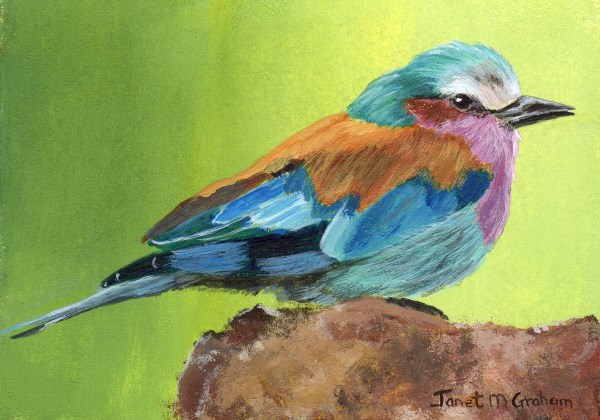 """""""Lilac Breasted Roller ACEO"""" original fine art by Janet Graham"""