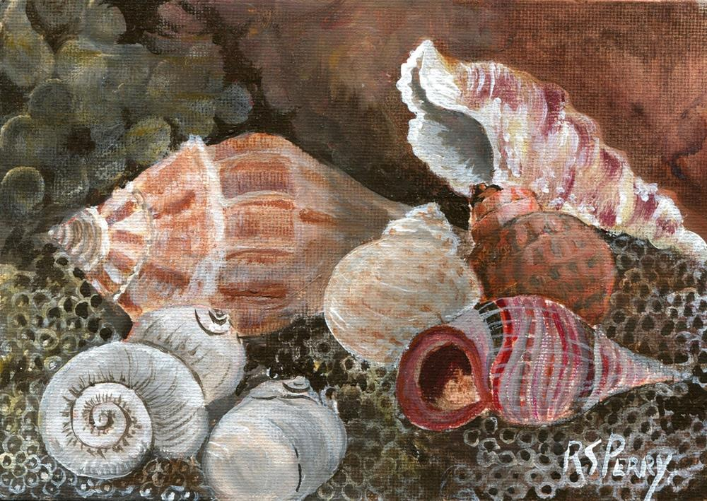 """""""Knobbed Whelk and Cerith Snail, moon snails, periw"""" original fine art by R. S. Perry"""