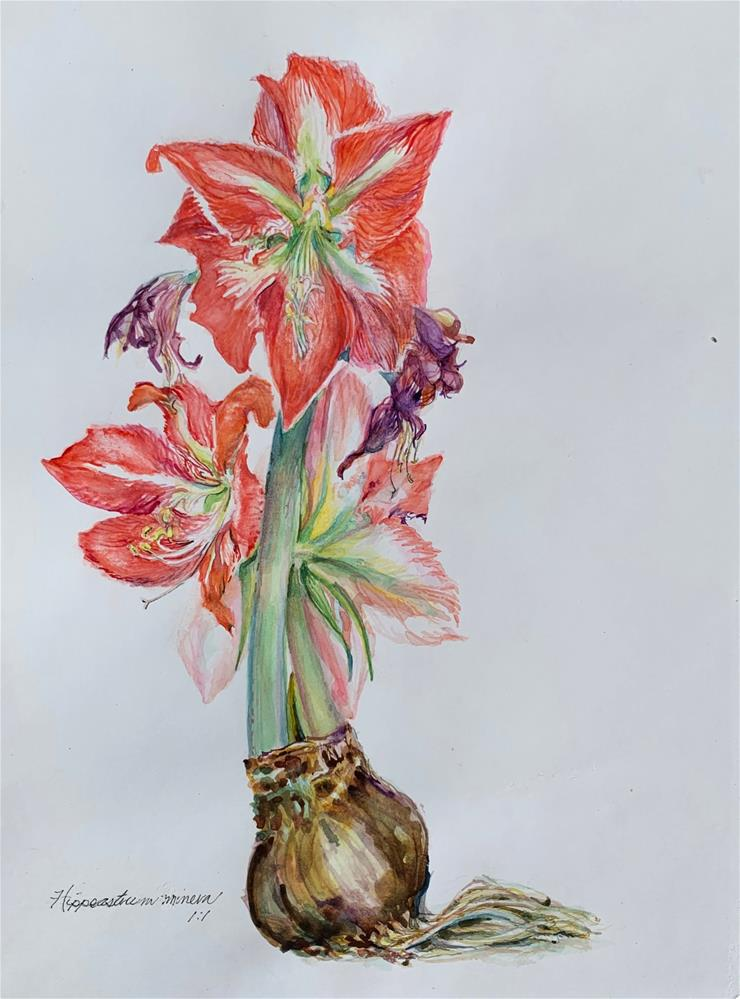"""Hippeastrum minerva"" original fine art by Jean Krueger"