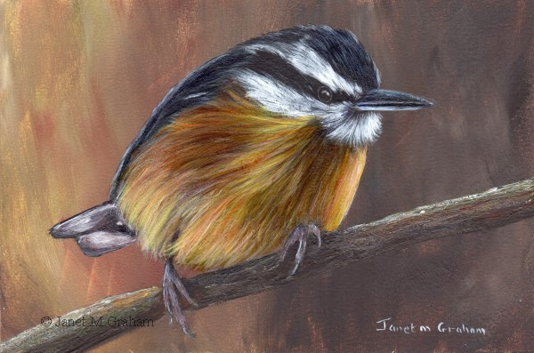 """""""Red Breasted Nuthatch No 2"""" original fine art by Janet Graham"""